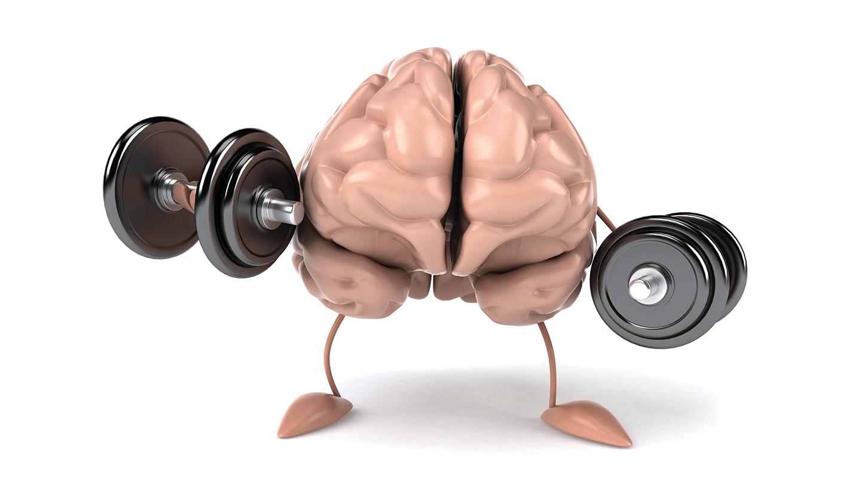 brain weights
